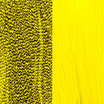 Duo Plumes Yellow