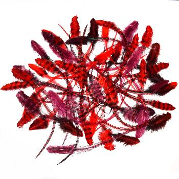 Lot de 50 Plumes de Frange Coloris Lady In Red: 17 € H.T.