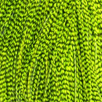 Plume Striée Fluo Green