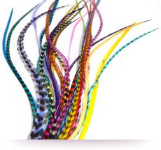 Plumes extensions naturelles v i plumes whiting - Plume dans les cheveux ...